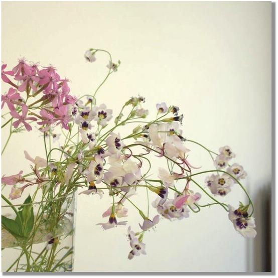 niko_niko_bloemen_schaduw
